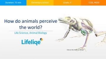 Free animal presentation ideas