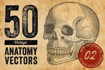 Vintage Anatomy Vectors