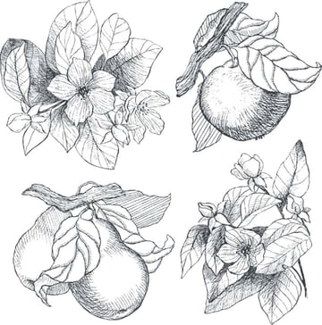 Botanical Illustration Black and White
