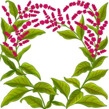 Amaranth Botanical Drawing