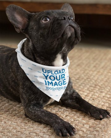 Mockup of a Small Dog Wearing a Sublimated Bandana