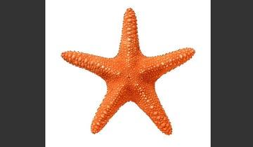 Select the Starfish