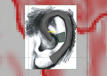 Creating the internal part of the ear