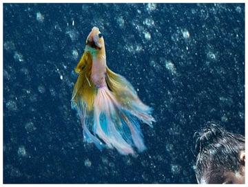 screen fish tail