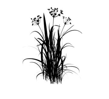 create black flowers