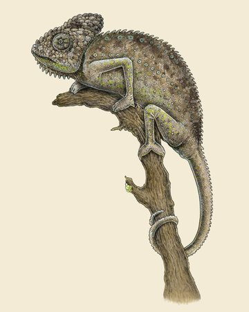 The Warty Chameleon by Eugenia Hauss