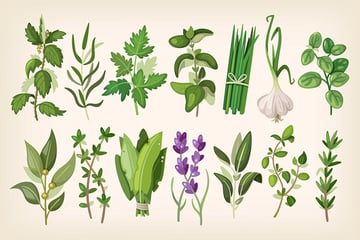 Common Herbs Illustrations by moonery