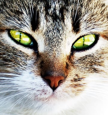 select the cats eyes