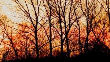 Forest at dawn stock image
