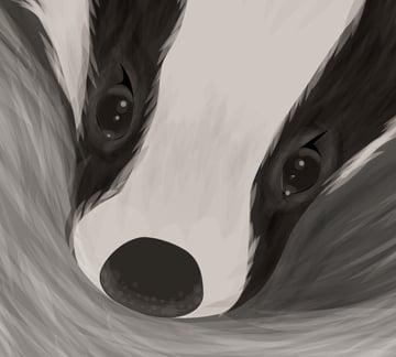 Baby Badger Close Up