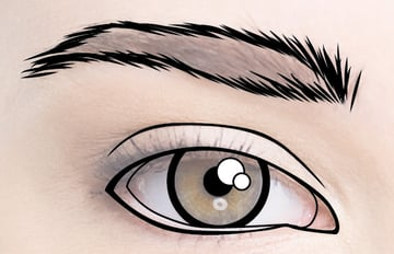 Outline the eyebrows
