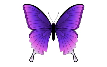 Butterfly number 1