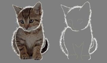 Around the cats fur