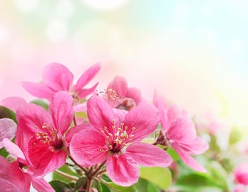 Pink Flowers from Photodune