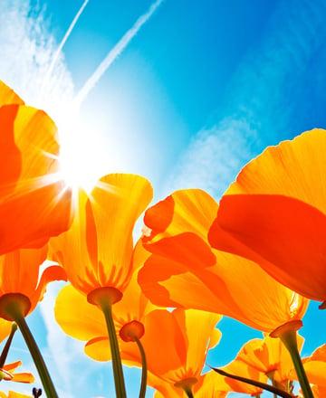 Macro Orange Flowers