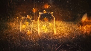 How to Create a Glowing Fireflies Photo Manipulation in Adobe Photoshop