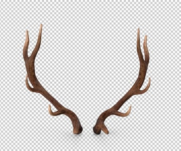 Elk antlers from envato elements