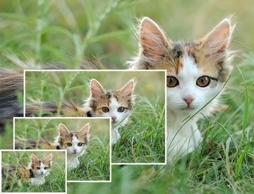 Resize cat image