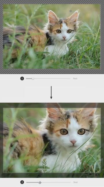 crop your photo