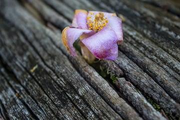 flower on board