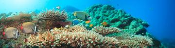 underwater panoramic photograph