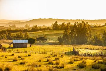 farms and mountains Ethiopia
