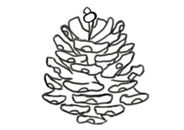Pine cone line art