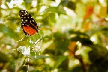 Monarch butterfly sitting on a leaf