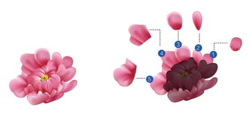 How to Draw Traditional Chinese Flowers in Illustrator Petal Layers 3