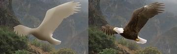 eagles 1 dodge and burn