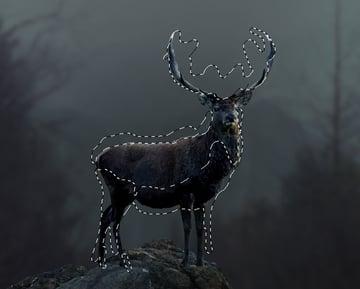 deer curves 1 masking