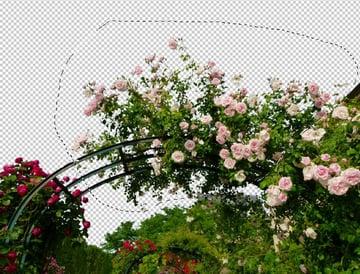 select upper roses