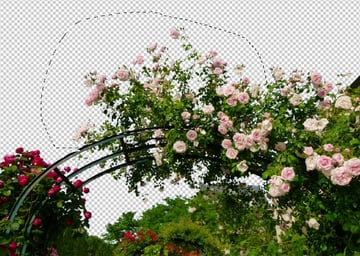 select upper roses more
