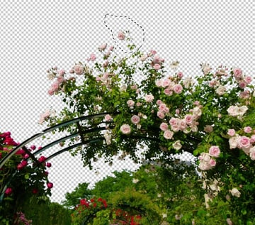 select a rose branch