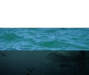 adding sea