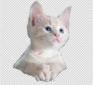 extract cat
