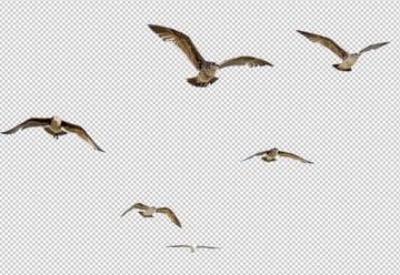 isolate birds 1