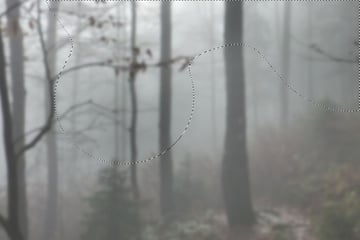 forest curves 1 masking