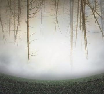 trees masking