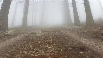 forest gaussian blur masking