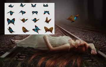 add butterfly