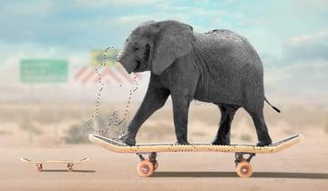elephant masking