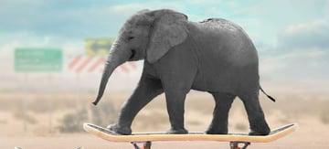 elephant cloning