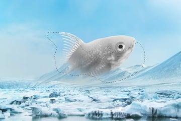 fish curves masking