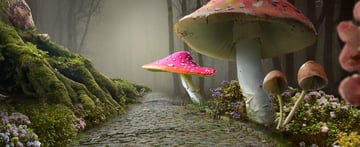 add mushroom 3