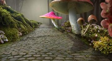 mushroom 3 shadow