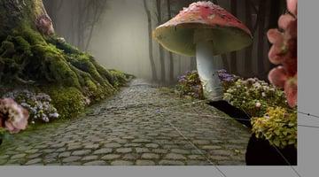 mushroom 1 shadow transforming