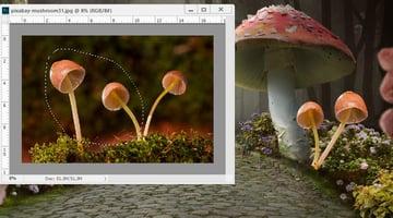 add mushrooms 2