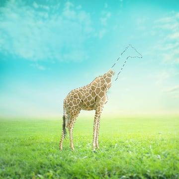 load giraffe selection