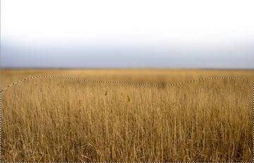 field gaussian blur masking